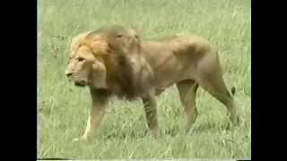 Atlas Safaris Uganda