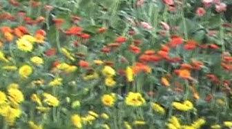 Eduskuntatalon kukkaketo