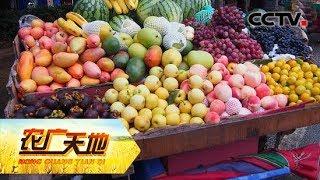 《农广天地》 五千斤急需水果的质量问题如何办 水果兄弟的财富梦 20190703 | CCTV农业