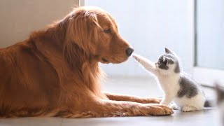 BIG DOGS  Meeting Cute Kittens  For The First Time (NEW)