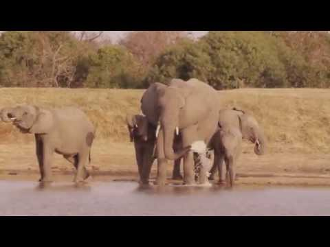 Experience Makanyi Private Game Lodge, South Africa with Carrier