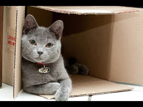 Playful cats - Funny cat, animal Compilation 2017