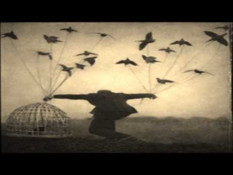 *Shels - The Conference Of The Birds