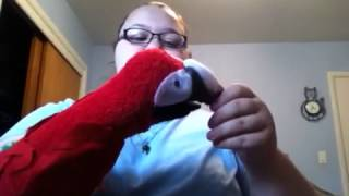 Updates and Scarlet Macaw Hand Puppet