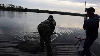 Cпортивная рыбалка на водоеме Ловля крупного карпа на фидер