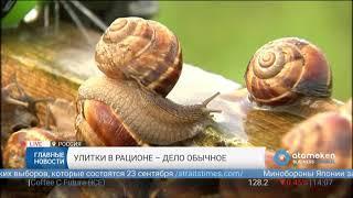 В России набирает популярность разведение улиток