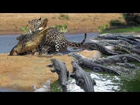 Cheetah Don't Escape