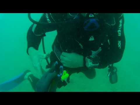 Dive the St Pete Barge 2-5-17