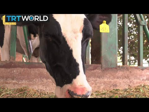 Climate Change: Farm Animals Helping To Combat Global Warming