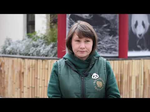 Вопрос: Почему содержание панды обходится зоопарку дороже чем содержание слона?