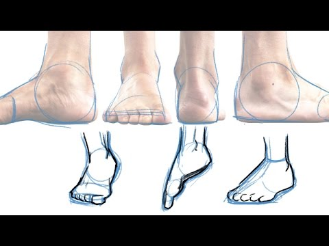 A Quick and Simple Guide to Drawing Feet