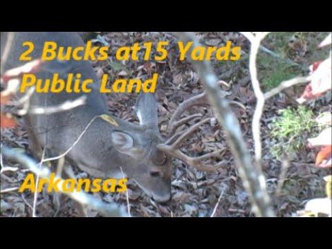 Rut Action On Public Land In Arkansas