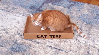 How to Trap a Cat #shorts