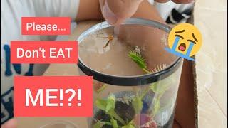 Venus Flytrap vs Giant Mosquito!!!