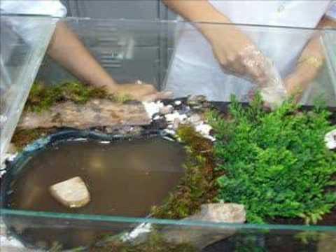 Aquaterr rio para tartarugas doovi for Lago tartarughe