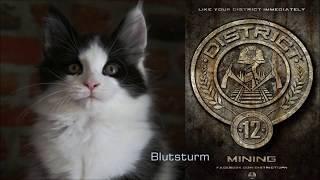 Warrior Cats Hunger Games | Nacht 1 (S4)