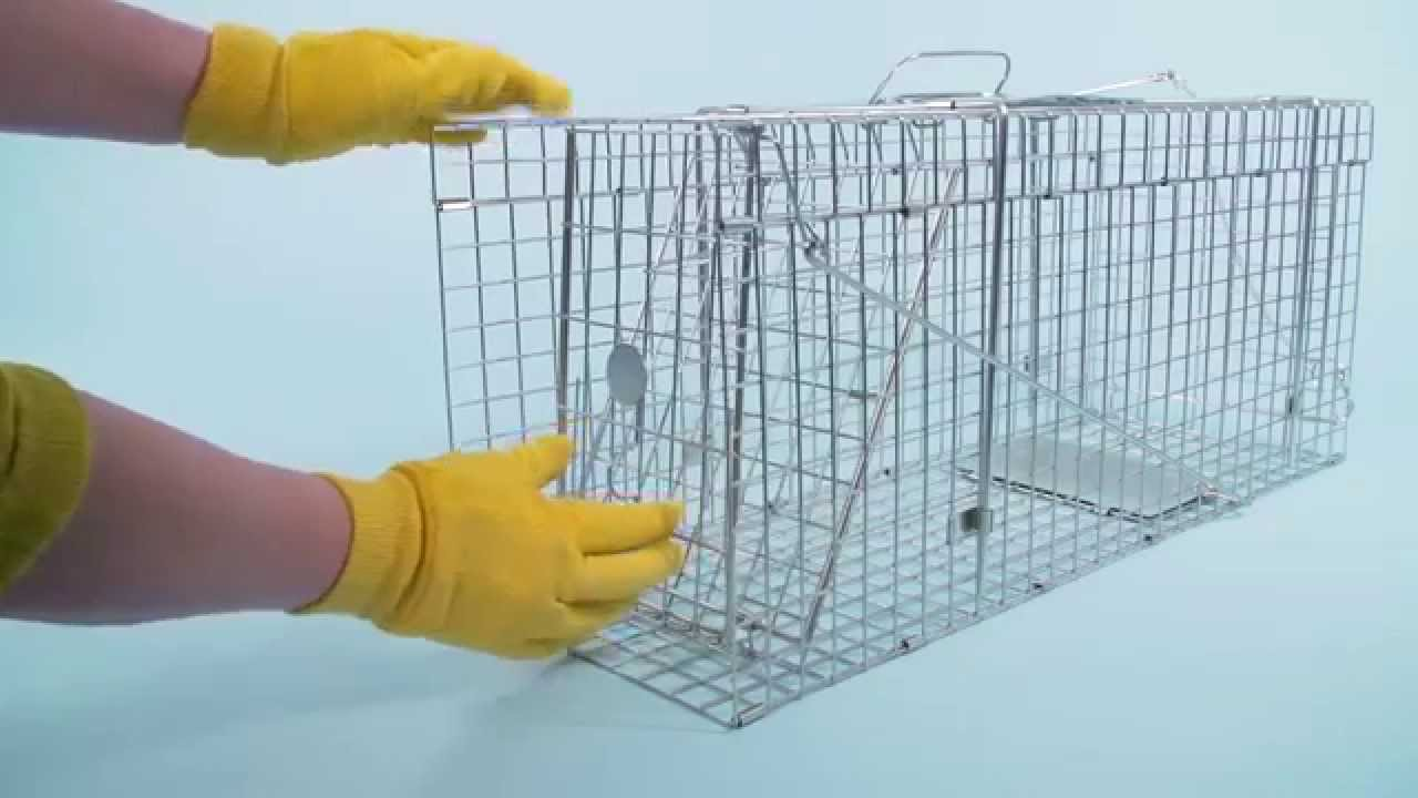 Fold-Flat Animal Trap-Large size cage (STV078) from Defenders - YouTube