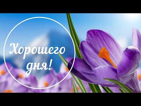 Хорошего дня! Доброго дня! Настроение День Пожелания