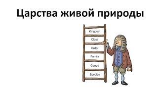 8. Царства живого (5 класс) - введение в Биологию