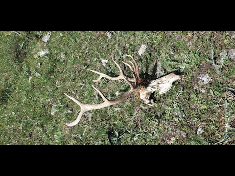 Montana Shed Hunting and Wyoming Shed Hunting! Final Elk Shed Hunting Trip of 2020