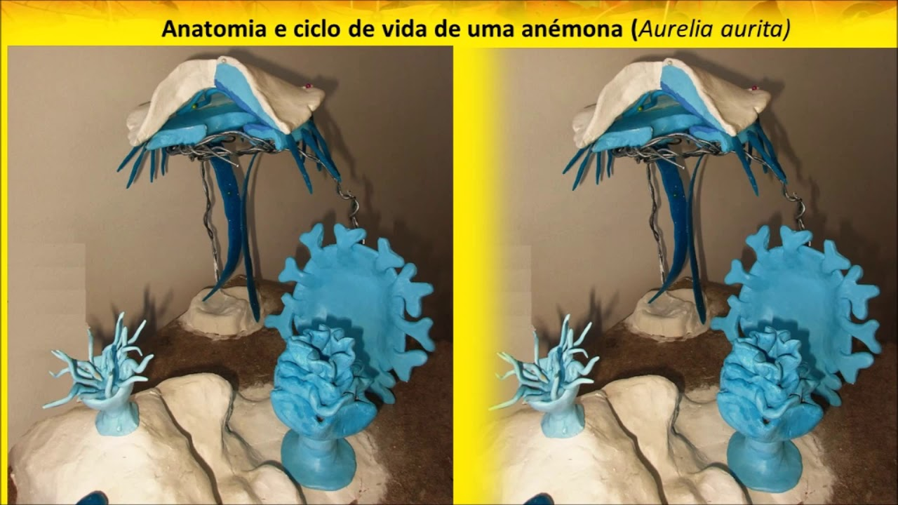 Exposição de Anatomia Discurso sobre o Método Anatómico IV edição ...