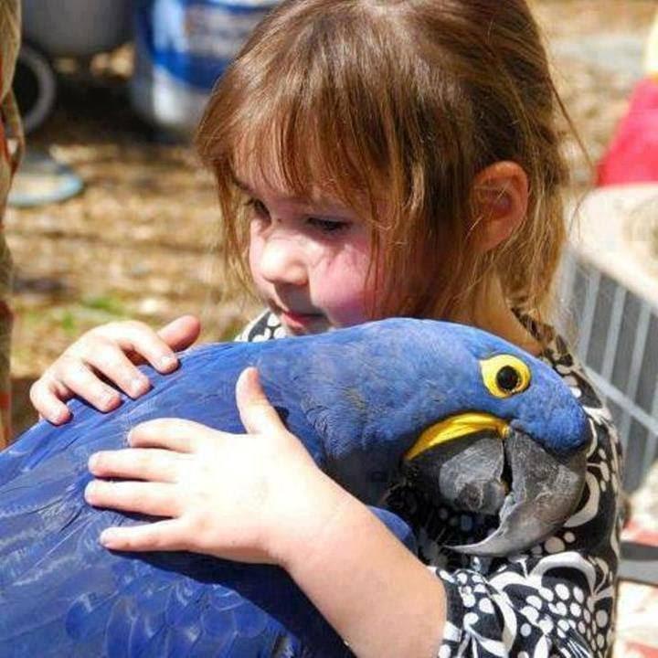 Cute Baby Hug Wallpapers Animals And Birds Market Emirates Dubai Youtube