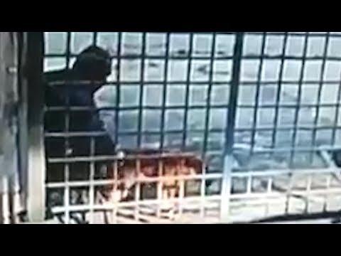 Homeless Man Who Sodomised Dog Caught