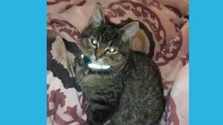 Смешные видео про котов про кошек Смеяться разрешается Подборка приколов с котами и кошками