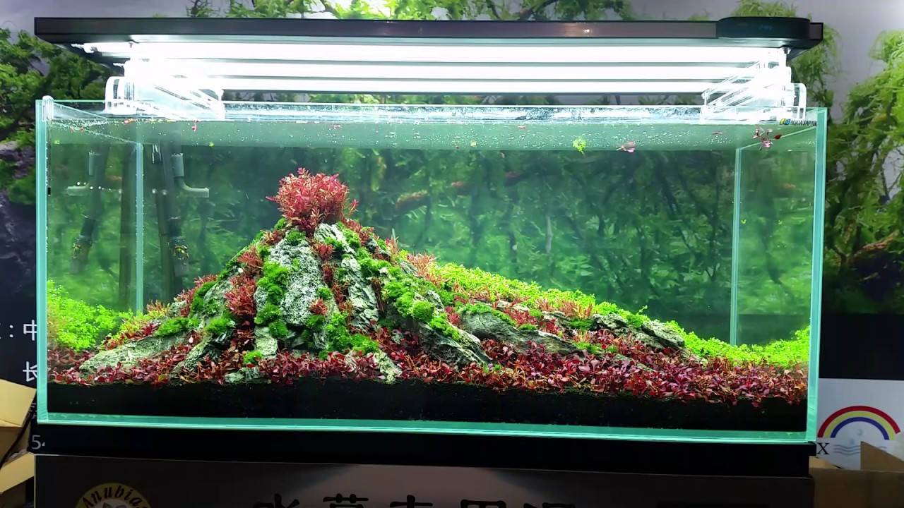 Aquascaping Master - CIPS 2016 - China - YouTube