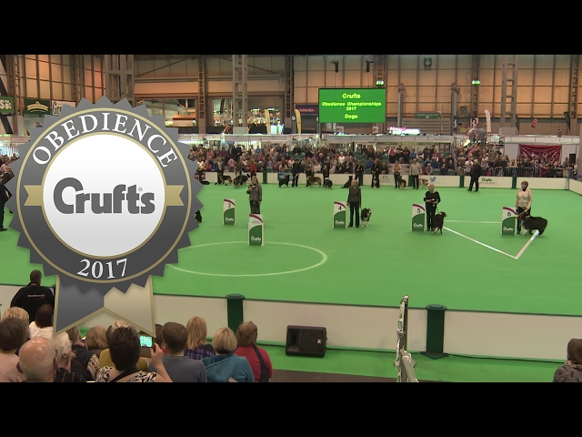 Obedience Championship - Dogs - Award Presentation | Crufts 2017