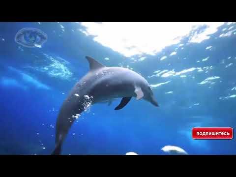 Дельфинотерапия .Исцеляющие звуки