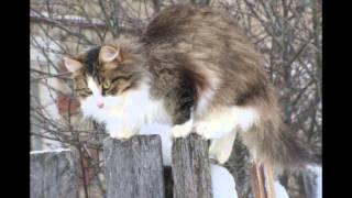 Кошки и птички