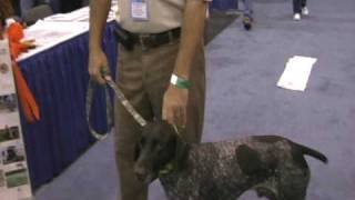 2009 Meet The Breeds German Shorthaired Pointer Booth