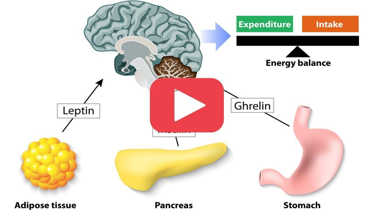 L'ormone che stimola l'attività fisica