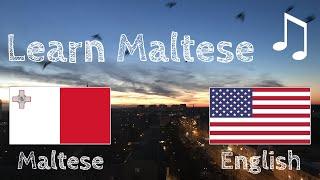 Learn before Sleeping  Maltese (native speaker)   with music