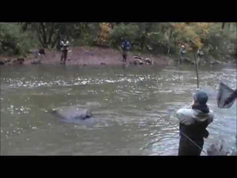 Olcott new york salmon fishing double d outdoors youtube for Salmon river ny fishing regulations