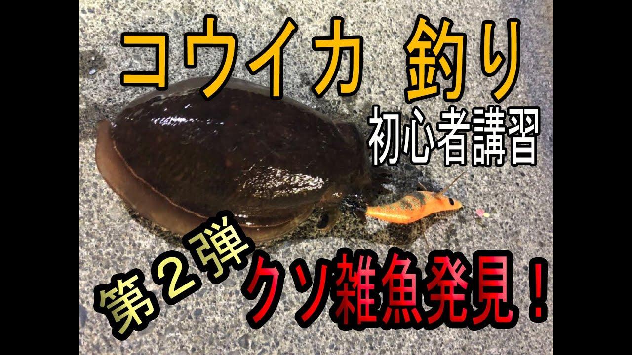 超簡単!コウイカ釣り 初心者講習 第2 弾 クソ雑魚発見!