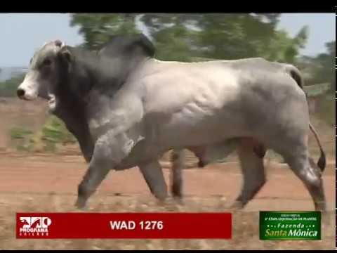 LOTE 13 - WAD 1276