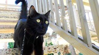 top 10 black cat facts