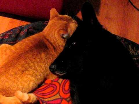 Кот и собака 1 - YouTube