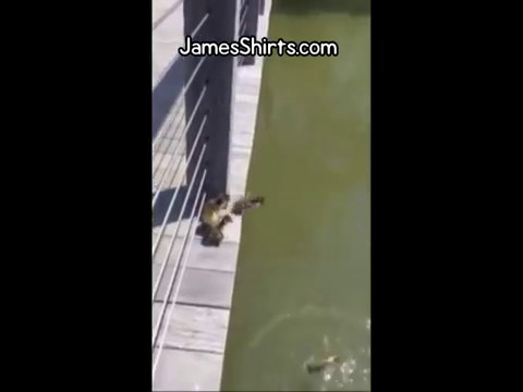 Ducklings Base Jumping Following Mother