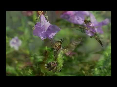 Mike Rowland ~ Magic Moment