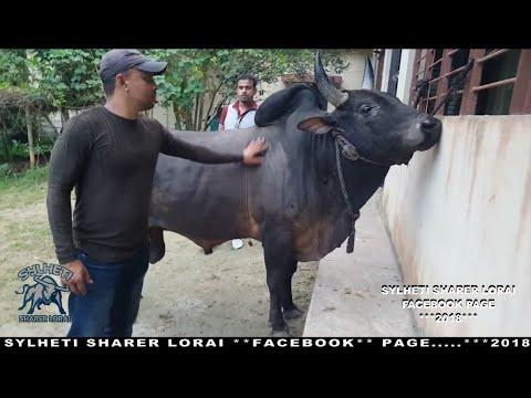 Black Fighter Jaganathpur - Syedpur 2018