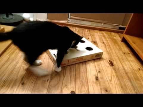 DIY cat toy FTW