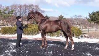 エスケンデレヤ(Eskendereya)-JBBA日本軽種馬協会2016