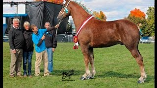 Canadian Ultimate Supreme Draft Horse Challenge Preview 2015