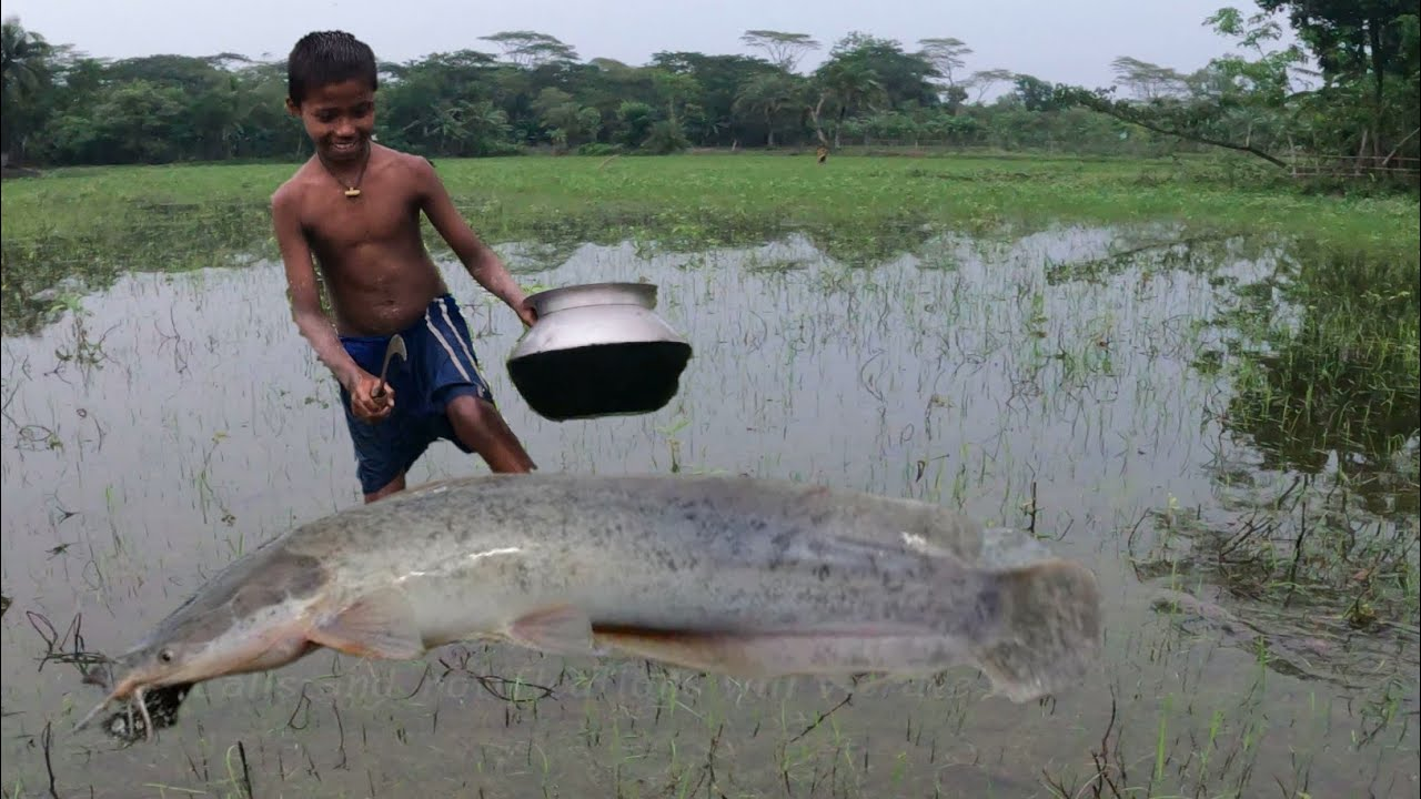 Really Amazing ! Boy Catching Big Catfish In Mud Water By Hand - Hand Fishing For Catfish