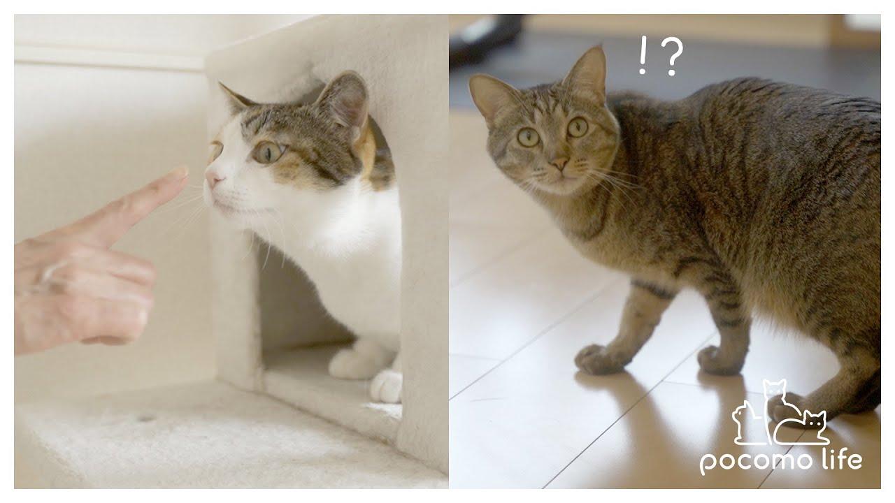 母と久しぶりに再会した猫たちの予想外な反応がこちら!