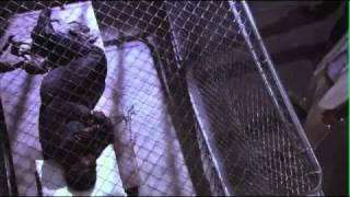 Kill Speed duasatu.com