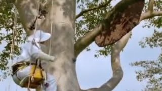 Giant honey bees - Life in the Undergrowth - BBC Attenborough thumbnail
